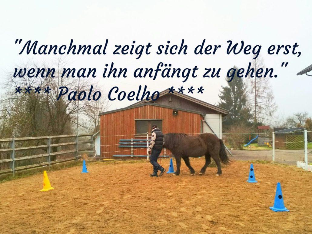 Trauma Pferde