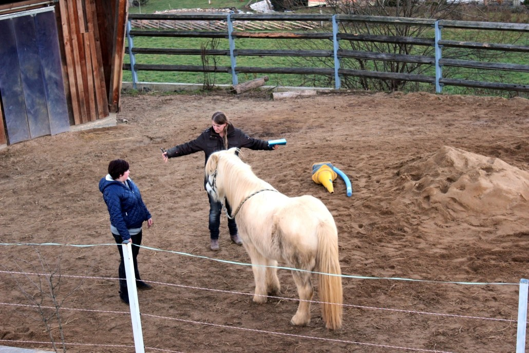 Grenzen setzen, pferdegestütztes Coaching